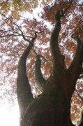 秋天的大樹