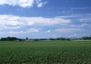 藍天白云綠草