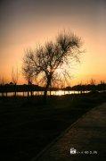 夕陽下剪影