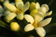 春天里的小花