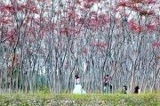東林紅樹林 踏春好去處