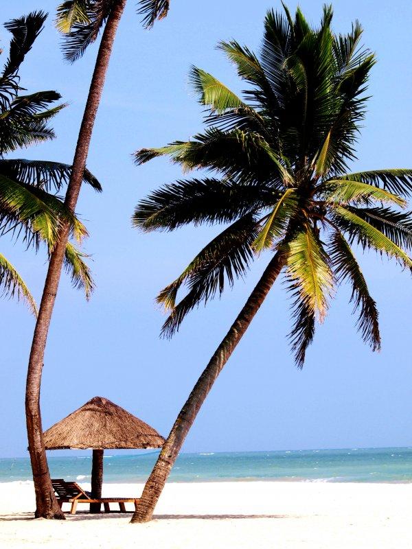 椰树商业招贴设计欣赏