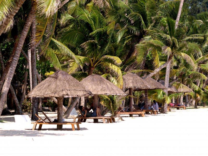 椰子林风景图片