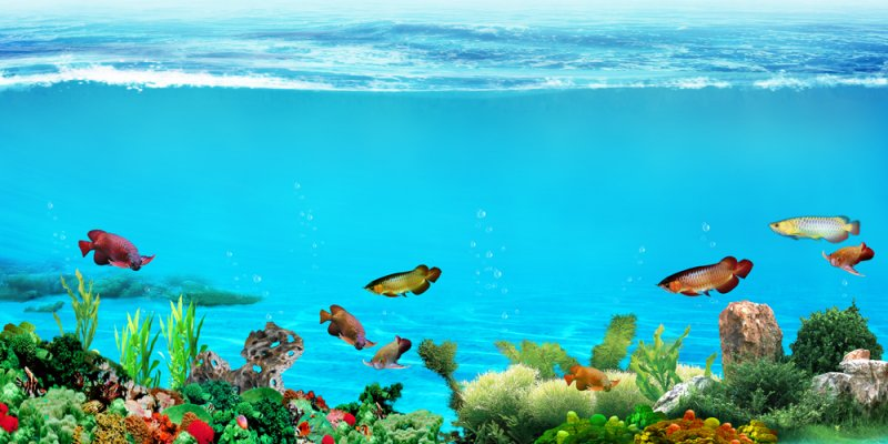 首页 ps分层专区 文化艺术 美术绘画  关键词: 说明:-鱼缸背景2 上一