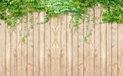 3D木板绿藤背景墙