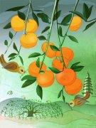 柑普茶和大红柑手绘插画