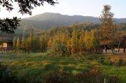 大石头景区翡翠湖水杉树林风光