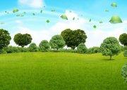 草地大树-绿色广告